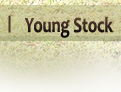 Young Stock